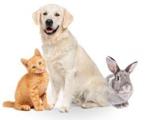 امنیت حیوانات خانگی با ردیاب شخصی
